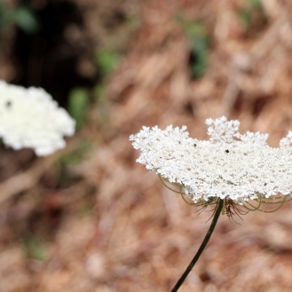 flowers2_edited-1